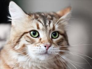 bigstock-Cat-Animal-31269347