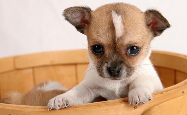 bigstock-Pop-up-Puppy-202694