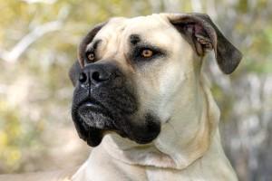 bigstock_Dog_1569651
